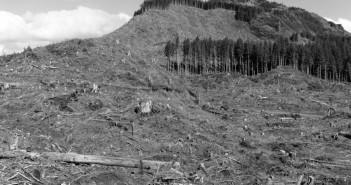 deforestacionbosques